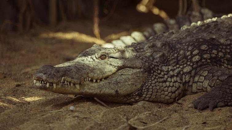 Petición de cambio en la ley para la problemática de los animales exóticos o muy peligrosos y el daño que ocasionan en el ecosistema